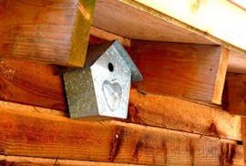 VialiiBirdBox